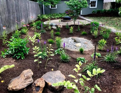 What is a Rain Garden? The Solution for a Soggy Yard