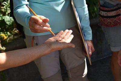 Hands examining plant specimen