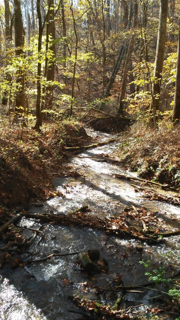 stream in a woodland - homesteading