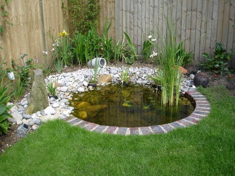 Natural Garden Pond