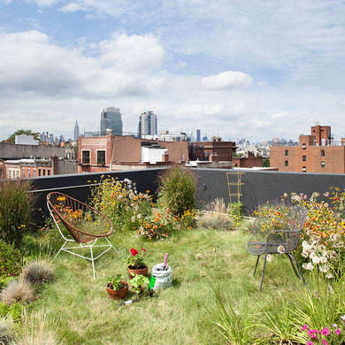 wild meadow roof garden on a walk-up