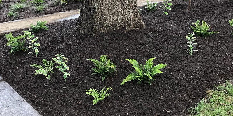 Mulch and plants around a tree
