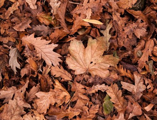 Can you be-leaf it?