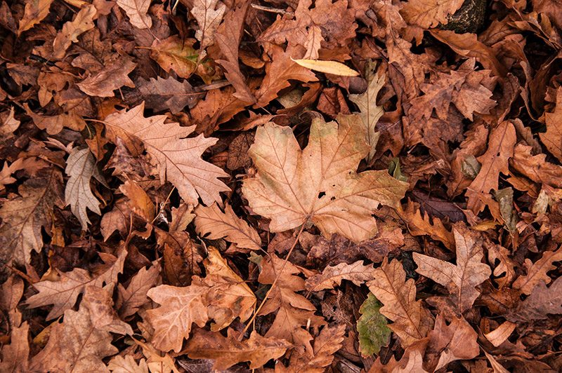 leaves greenscape geeks indianapolis landscaping company