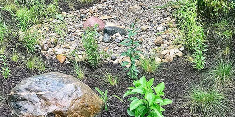 young rain garden