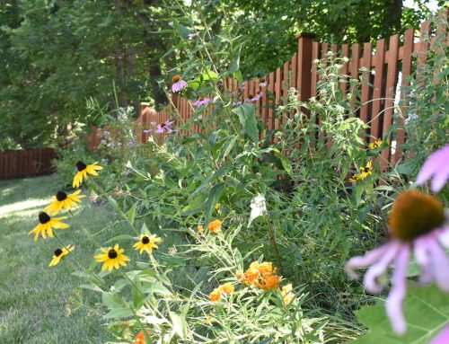 What Are the Benefits of Native Plants?