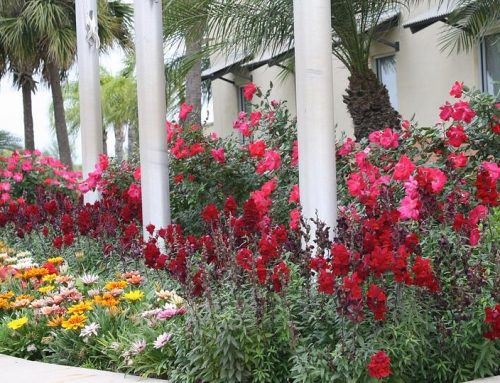 5 Ways to Incorporate Native Plants into Commercial Landscaping