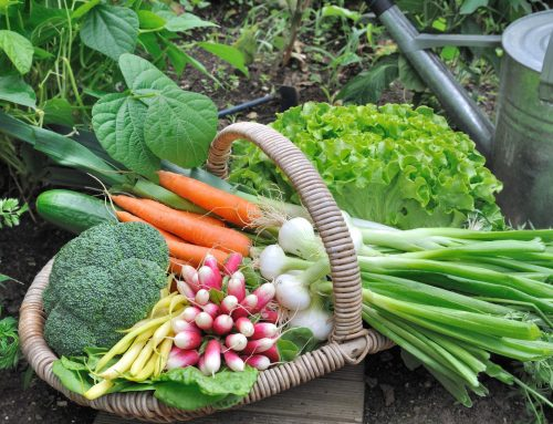 Why You Should Start a Food Garden