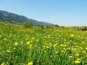 prairie land, meadow