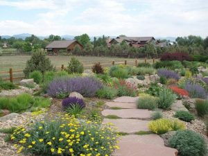 xeriscaping landscape
