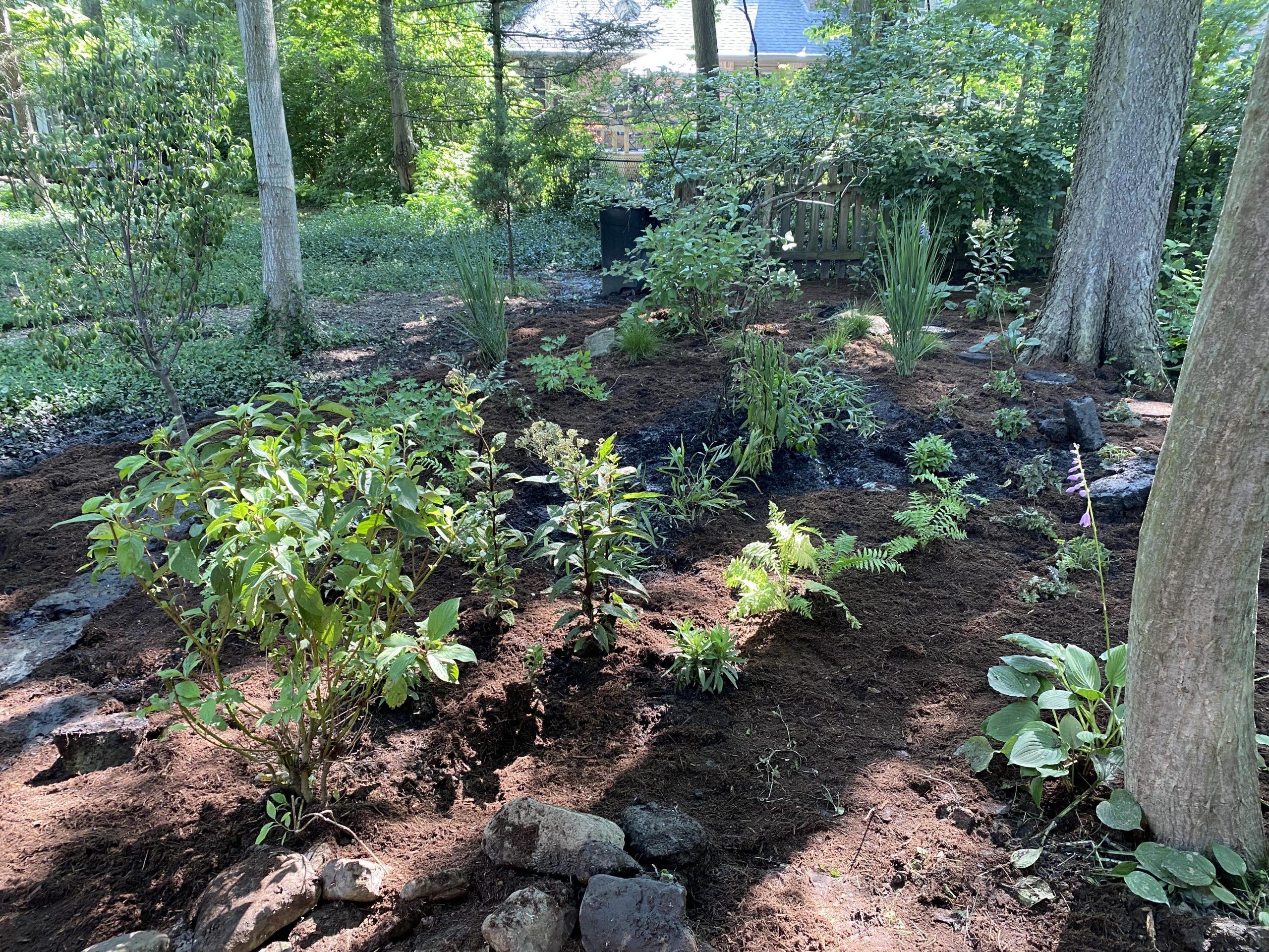 wood palette, native wood plants