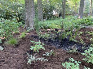 woodland palette, native woodland plants