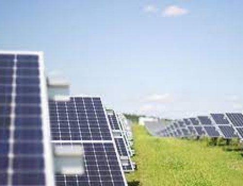 Native Planting Around Solar Panels