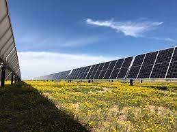 solar panels, native plants